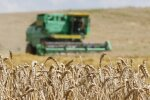 В Литве обмолочена четверть площадей зерновых