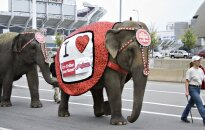 """""""Ringling Bros cirkas už dramblių žalojimą ir žiaurų elgesį po dvejų metų sulaukė baudos"""