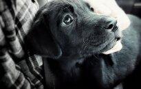 Skaitytojos priežastys, kodėl reikia įsigyti šunį