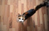 Katytė ieško namų