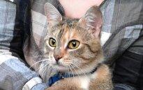 Pastelinių spalvų katytė Gilė ieško namų