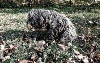 Abejingumo ir žiaurumo pavyzdys: neglobojamas šuo laiku taip ir nesulaukė pagalbos