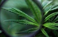 Под Ригой нашли подпольную плантацию марихуаны