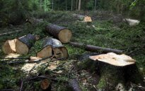 ЕС подал в суд на Польшу за вырубку Беловежской пущи