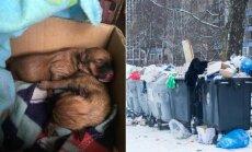 Vilniuje išmesti dviejų dienų šuniukai
