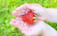 Tai, ko nežinojome apie kryžminę alergiją prof.R.Dubakienės komentaras