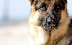PETA призвала бойкотировать фильм за издевательства над псом