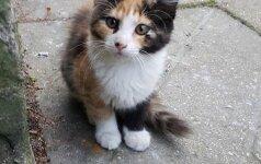 Meilios ir jaukios katytės ieško namų