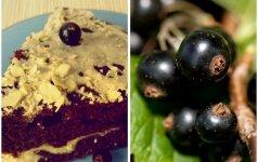 Serbentinis varškės pyragas su kakava mamos receptas