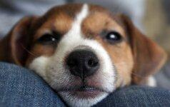 Interneto sensacija tapo šuo, keičiantis kūdikiui sauskelnes VIDEO