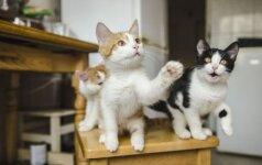 Išgelbėtiems Naujosios Vilnios kačiukams reikia namų