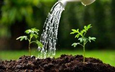Lietuvių daržininkai pataria, kaip užauginti ir egzotiškus augalus