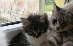 Katinėlis Lutukas – mažas ir nusipelnęs gyventi namuose