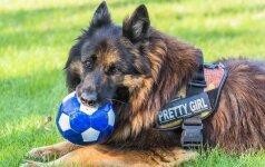 Už informaciją apie Pavilnyje dingusį šunį siūlo solidų atlygį
