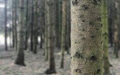 В Беларуси идет экстренная вырубка лесов