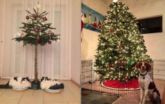 Genialūs būdai papuošti namus, kai juose gyvena katė arba šuo