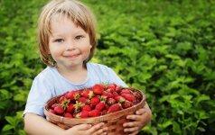 7 uogų šaldymo gudrybės, kurias žino patyrusios šeimininkės