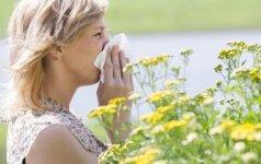 Kodėl žiedadulkėms alergiškų žmonių tik daugės?