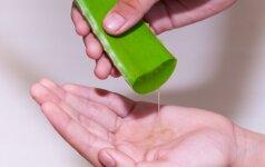 Neįtikėtina alavijo nauda - natūralus pačių užaugintas sveikatos ir grožio šaltinis