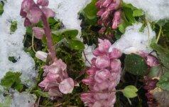 Около городища женщина нашла редкое растение