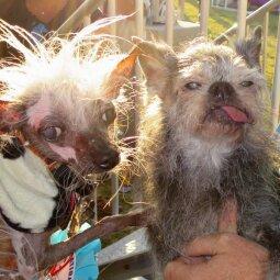 Bjauriausi šunys: ima juokas, kol nežinai istorijų