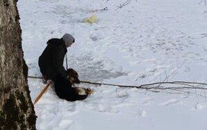 Vieversio šventės dalyviai tapo kankinamo šuns gelbėtojais
