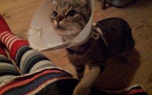 Gavome laišką. Suskubome padėti. Dovanojama jauna katė.