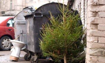 Įmonė surinks savo klientų prie konteinerių paliktas eglutes