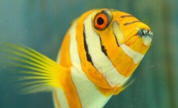 Į Kauno akvariumą prileista egzotiškų žuvų