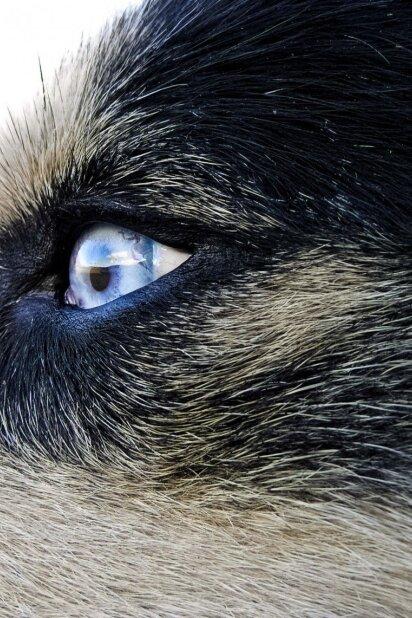 """Neįtikėtinas """"vilko akis"""" turintis vaikinas pretenduoja tapti metų gražuoliu (FOTO)"""