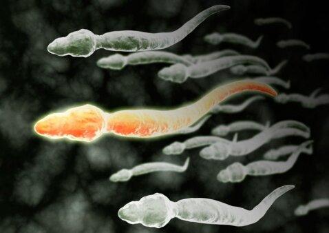 Spermatozoidai: kas yra tiesa, o kas – melas?