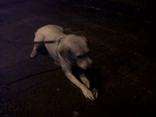Savaitgalį rasti du šuneliai