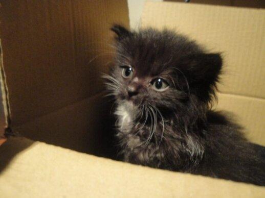 Du kačiukai rasti konteineryje. Skubiai reikia globos arba namų!