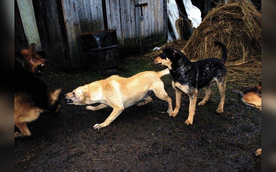 Владивосток: за убийство тысячи собак мужчине грозит тюрьма