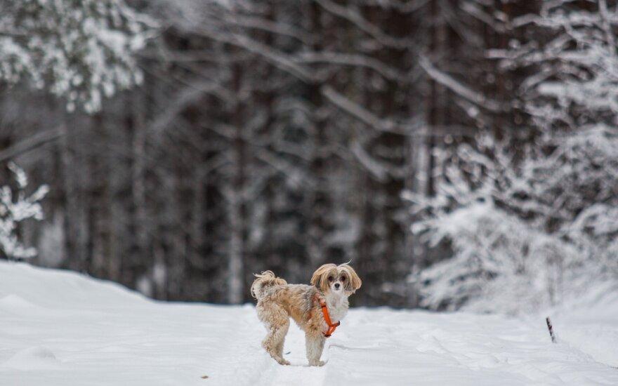 Погода: снова увидим зиму во всей красе