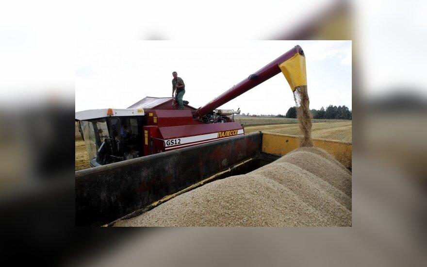 Литва поставит в Грузию 80 000 тонн пшеницы