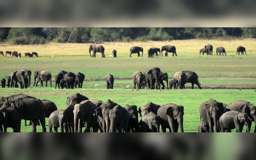 Власти Шри-Ланки завершили перепись слонов