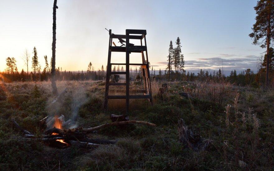Per miško gaisrus žūva laukiniai gyvūnai