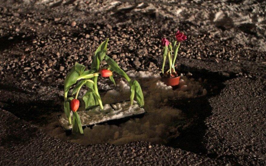 Gėlės Kauno Aušros gatvės duobėse