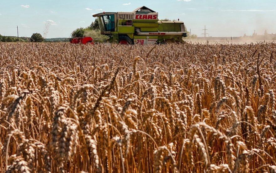 Минсельхоз: урожай зерна в этом году рекордно большой, но цены растут