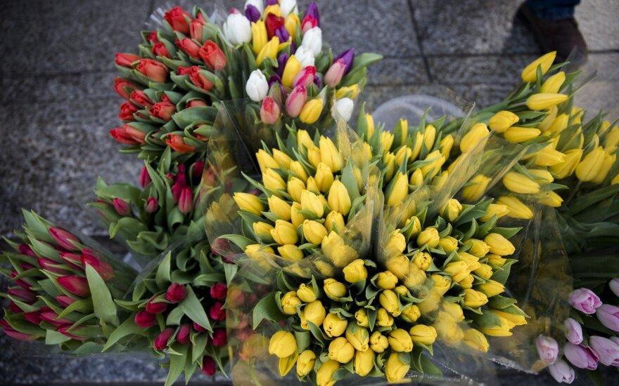 """В Вильнюсе """"зацвели"""" тюльпаны: сколько стоят цветы в праздник"""