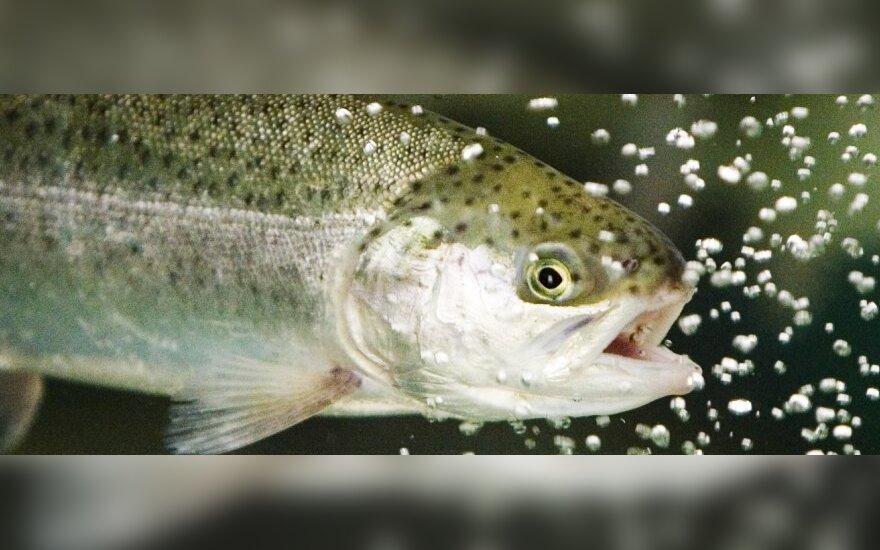 С 1 октября в Литве запрещено ловить лососевых