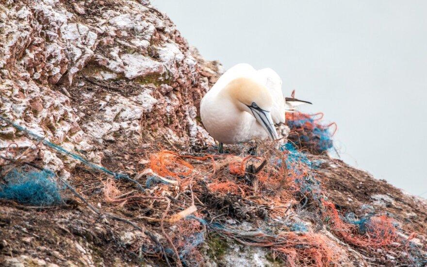 Įrantys žvejų tinklai tampa gyvūnų maistu