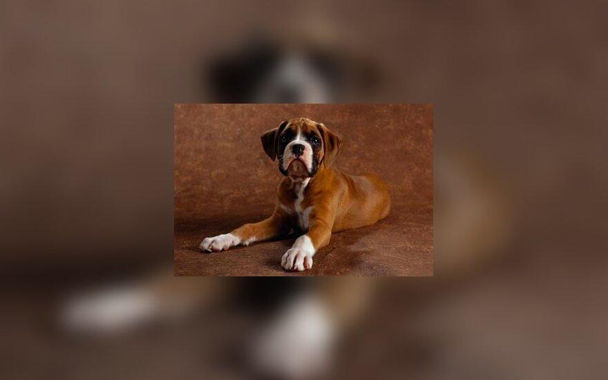 Охотник застрелил собаку породы боксер