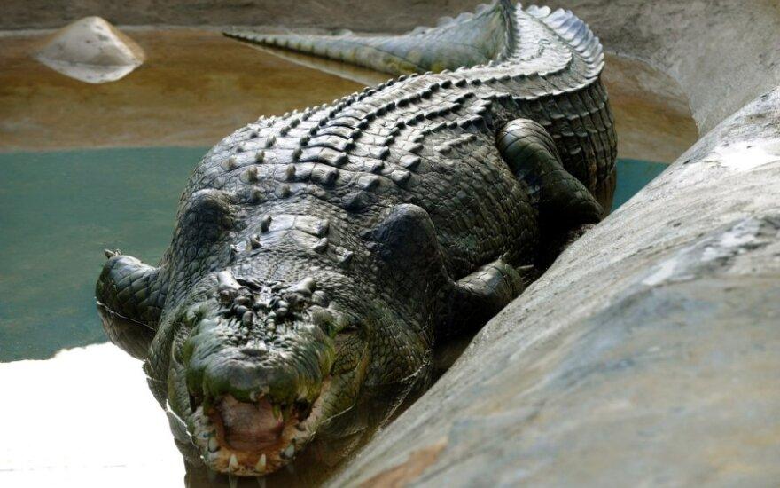 Filipiny: Zmarł największy na świecie krokodyl