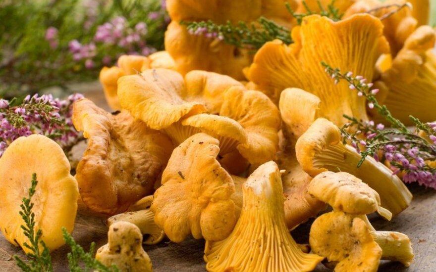 Цены на первые грибы бьют рекорды