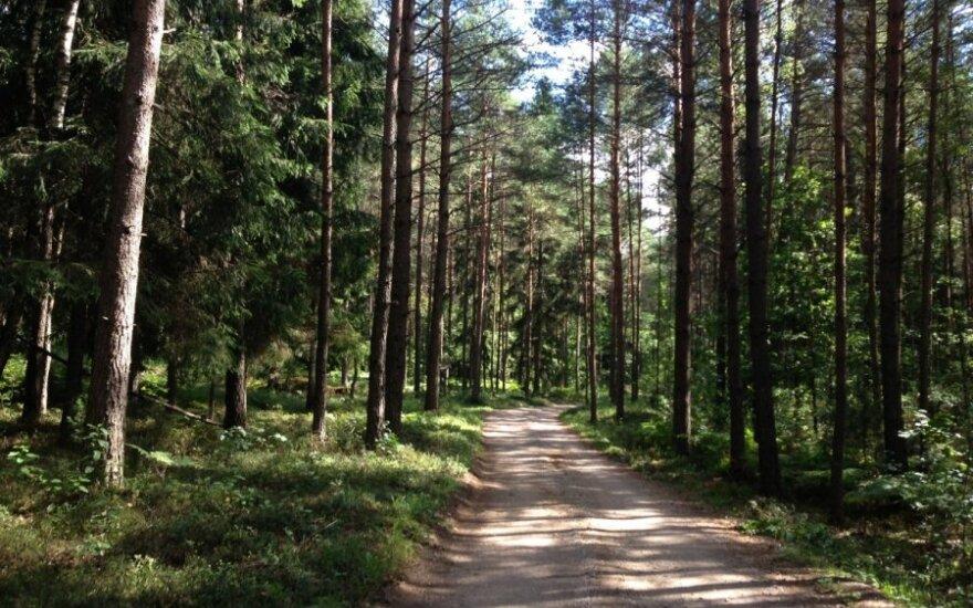 Останется ли Литва лесным государством?