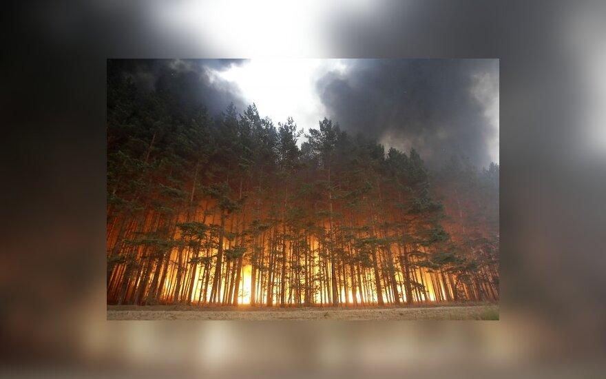 Лесные пожары в РФ не удается взять под контроль