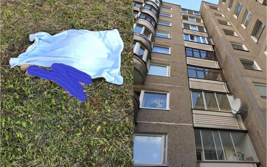 В столице из окна на 9 этаже выпала собака, начато расследование