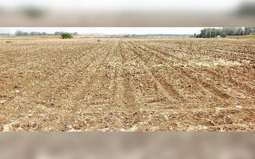 Из-за засухи в Литве прогнозируется плохой урожай овощей и зерновых